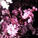 20130323_214736.jpg